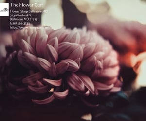 florist, flower delivery, and florist in baltimore image
