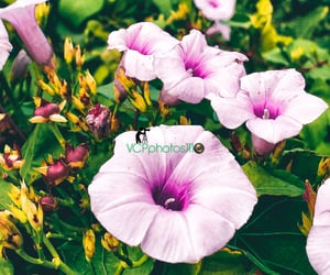 flowers, photography, and prints image