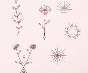 flowers, lines, and minimalistic image