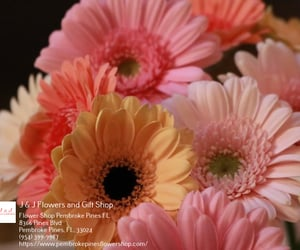 florist, flower delivery, and flowers image