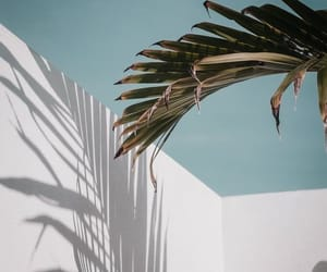 palm, summer, and vibes image