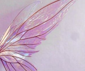 fairy, wings, and fairy wings image