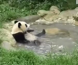 cute, animals, and gif image