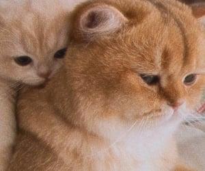 adorable, kitten, and kitties image
