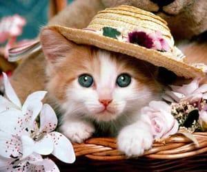 cat, baby cat, and cute cat image