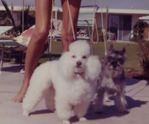 aesthetic, dogs, and old photos image