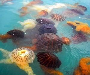 animals, beautiful, and jellyfish image
