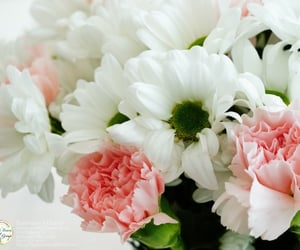 flowers, flowers in baltimore, and florist image