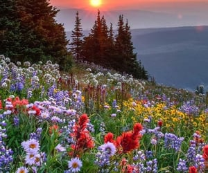 flowers, forest, and green image