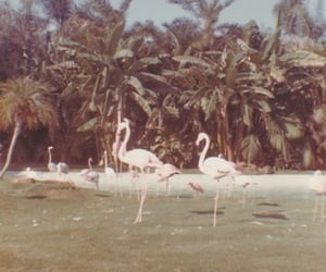 aesthetic, flamingo, and flamingos image