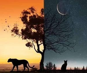 paisajes, yin-yang, and lunas image