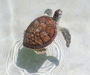 turtle, animals, and nature image