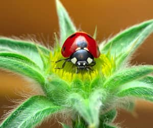 ladybug, popular, and 500px image