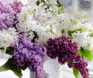 Adorable lilac 💜🤍