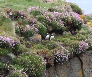 nature, puffin, and birds image