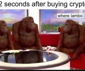 animal, chimpanzee, and lol image