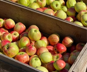 apple, apples, and cottage image
