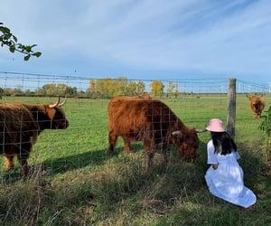 animals, countryside, and girl image
