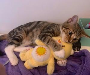 cat, baby animals, and kitten image