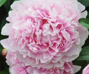 bouquet, decor, and floral image