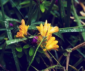 droplet, flower, and rain image