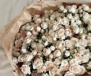 flowers, roses, and aesthetics image