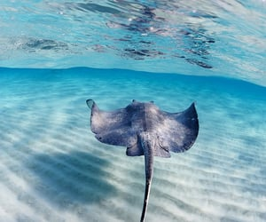 animals, ocean, and fins image