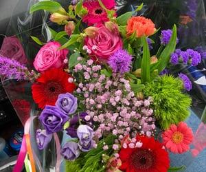 gypsophila, roses, and germini image