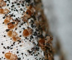 bed bugs control, pest control singapore, and pest management singapore image