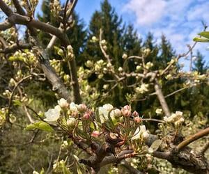aesthetic, backyard, and blooming image