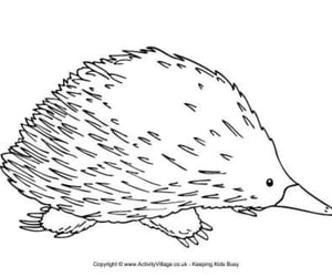 art, drawing, and echidna image