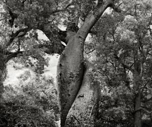 2006, big trees, and the lovers image