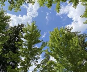 arboles, naturaleza, and sol image