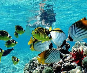 beauty, diving, and fish image