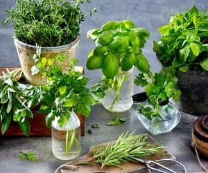 rosemary, sage, and thyme image