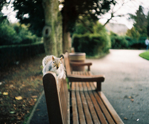 nature, squirrel, and park image