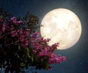 blossoms, full moon, and may image