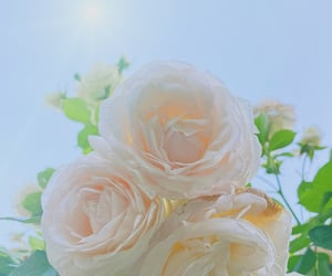 rosa, white aesthetic, and rose image