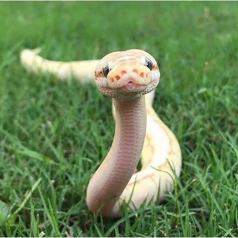animals, colorful, and python image