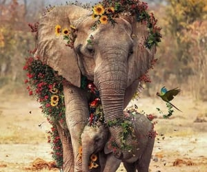 animals, happines, and elephant image