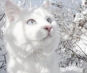 cat, animal, and snow image