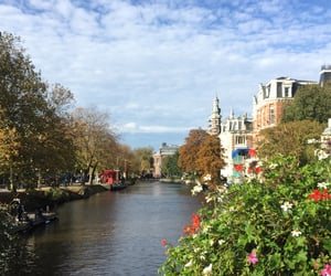 amsterdam, flowers, and holland image
