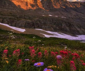 aesthetic, mother nature, and Wild Flowers image