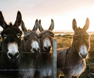 Donkey sunset