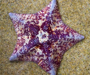 accessories, magical, and sea image