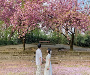 cherry blossom, couple, and flowers image