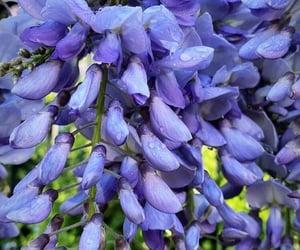 naturaleza, belleza, and flores image