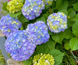 flower, japan, and rain season image