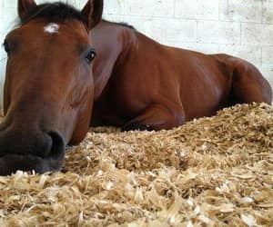 doin' a lil snooze, a horse of course, and no rides today image