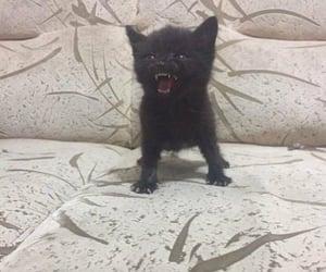 black, kitty, and kitten image